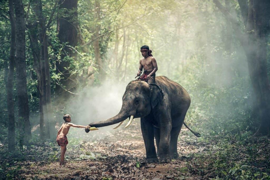 טיול פילים